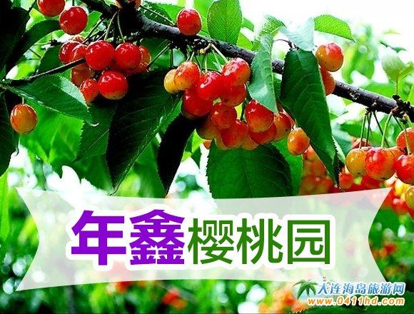 旅顺龙王塘年鑫樱桃自采园,寻访大连樱桃故事指定樱桃园