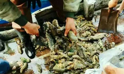 塞里岛金羽渔家