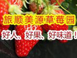 旅顺美源草莓采摘园,人好、果好、味道好!