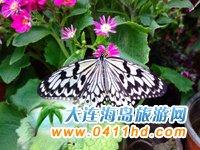 旅顺蝴蝶园精美图集