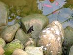 旅顺蝴蝶园:鱼腹之餐
