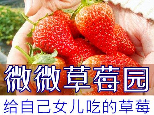 大连杏树屯微微草莓采摘园,种给自己女儿吃的草莓
