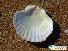 被浪花琢磨过的贝壳