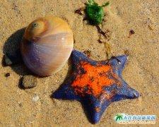 海边的海星