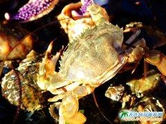 哈仙岛螃蟹图片
