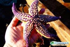 色彩艳丽的漂亮海星