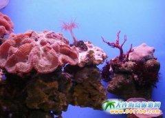 大连圣亚海洋海底世界图片