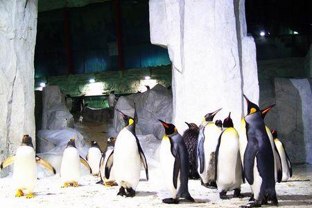 圣亚海洋世界美图--小企鹅