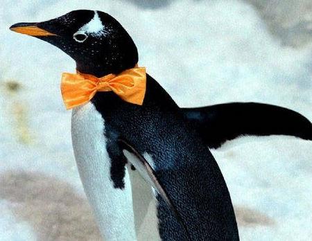 大连圣亚海洋世界企鹅展翅