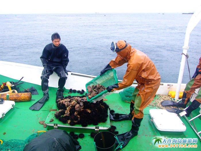 獐子岛海珍品的深海捕捞