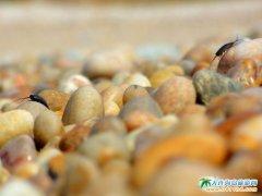 獐子岛镇的鹅卵石图片
