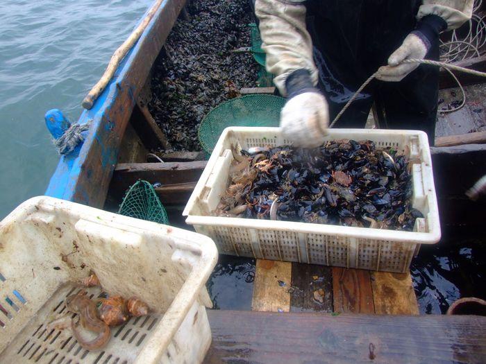 海王九岛海上捕捞图片2