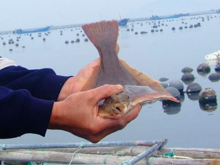 海王九岛网箱养殖海鲜11