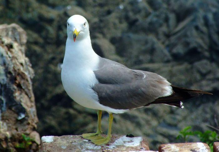 海王九岛元宝岛上的海鸥图片1