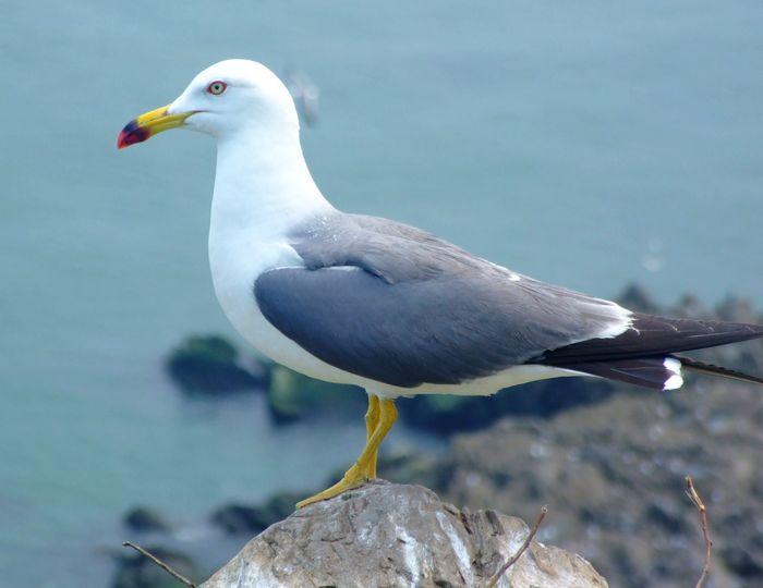 海王九岛元宝岛上的海鸥图片6