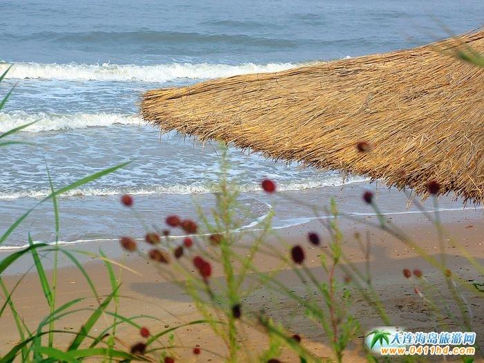 西中岛图片-海风中的花草
