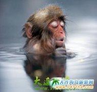 日本长野的地狱谷温泉