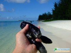 塞班岛旅游图片-黑如木炭的海参