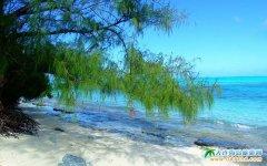 军舰岛图片-随风摇弋的绿松
