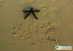 塞班岛的海星图片