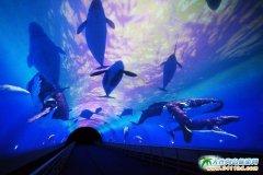 大连圣亚海洋世界天幕影院图片