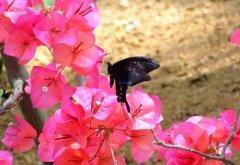 蝴蝶体验馆赏花图片