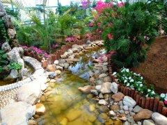 旅顺蝴蝶园图片之南国风光小桥流水