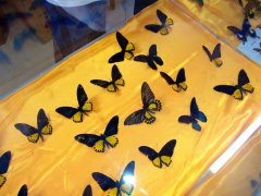 旅顺蝴蝶园体验馆图片