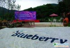 金石滩蓝莓谷庄园图片