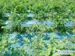 大连薰衣草庄园蓝莓采摘一日游