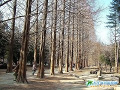 韩国济州岛旅游线路2:首尔济州江原道四飞五日游3320元