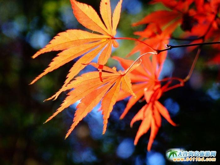 日本旅游图片―东京平林寺枫叶图片