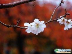 日本旅游景点图片――秋色的大阪