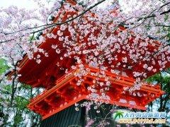 真正的日本――京都