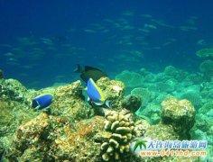 马尔代夫美如梦幻的水底世界