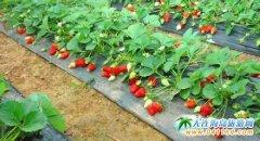 2013大连草莓采摘+香格里汤泉宫温泉一日游