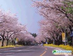 5月大连到韩国旅游特价:首尔江原道5日游2090元