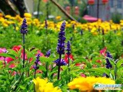 大连温泉图片――鲜花锦簇的大连金石唐风温泉