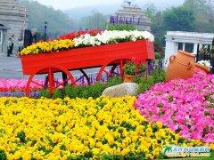 美丽大连,花团锦簇的大连棒棰岛景区图片