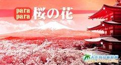 大连到日本旅游:樱花、温泉、美食一起来