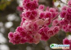 2015大连旅顺龙王塘―旅顺龙王塘樱花园的开业时间