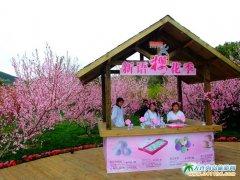 旅顺樱花园图片――203樱花园