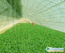 大连旅顺汇美园艺草莓采摘园
