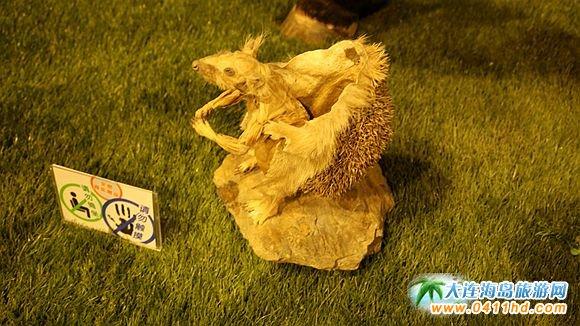 """大连/这次展览是生命奥秘博物馆首次展出""""小动物""""标本,可以说是..."""