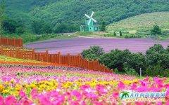 大连乡村旅游发展迅速,产业化发展成为气候