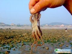 格仙岛图片――抓�M蛸