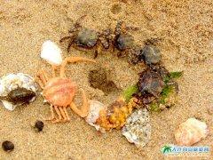 哈仙岛趣图:和谐社会,群蟹大战
