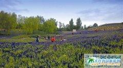 """旅顺英歌石植物园举办""""山地菊花展"""",引来游客5000多人"""