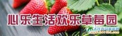 大连金州心乐生活欢乐草莓采摘园