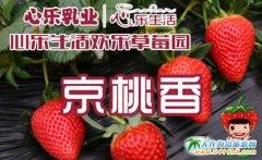 """名门贵族,""""京桃香""""草莓"""